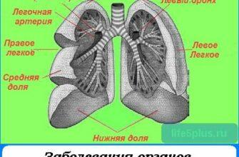 """alt=""""болезни дыхательных органов"""""""