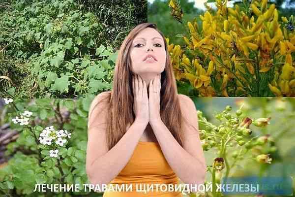 """alt=""""Травы для щитовидной железы"""""""