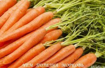 """alt=""""Свойства моркови"""""""